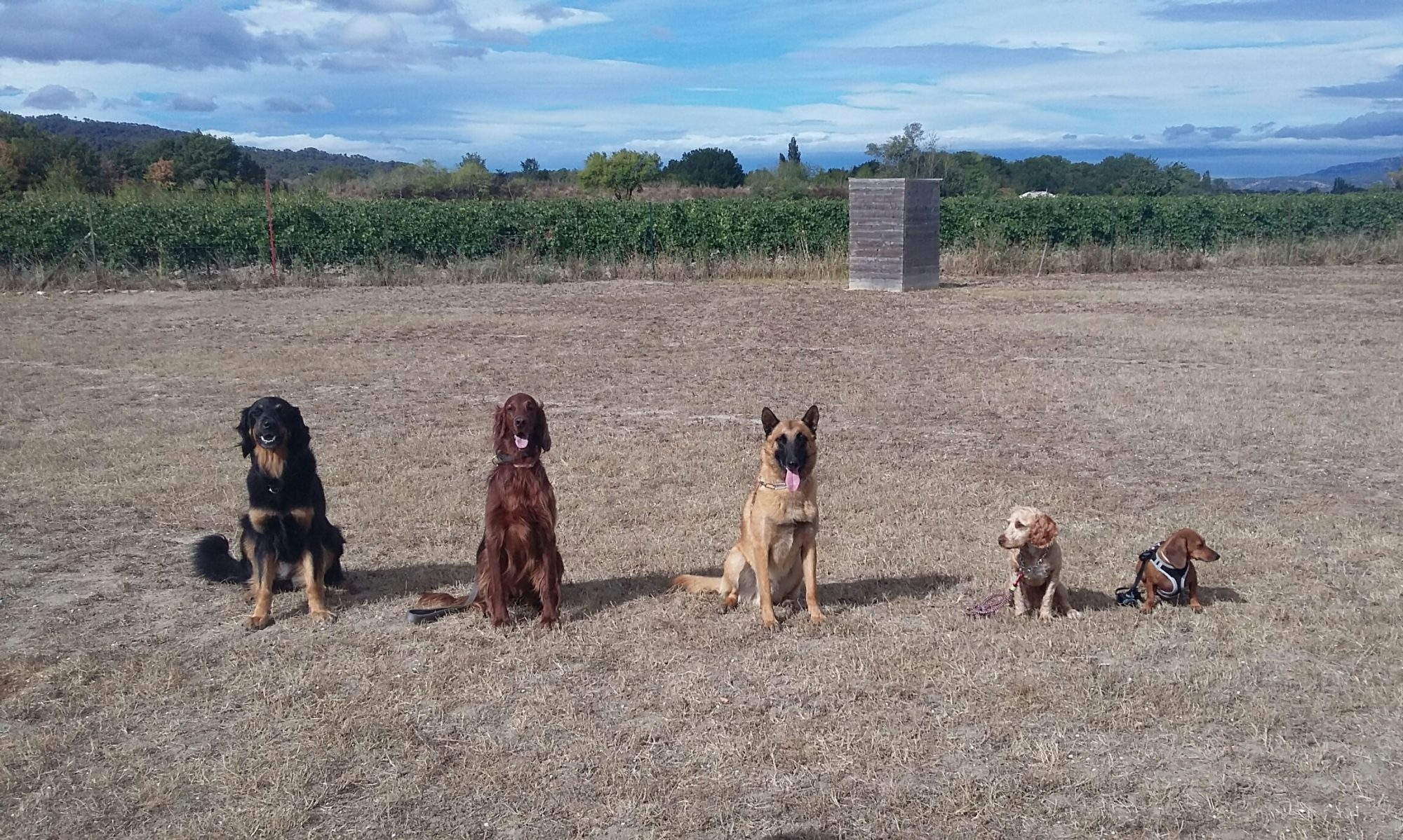 Groupe Cynotechnique Luberon 84  Education Canine Cadenet