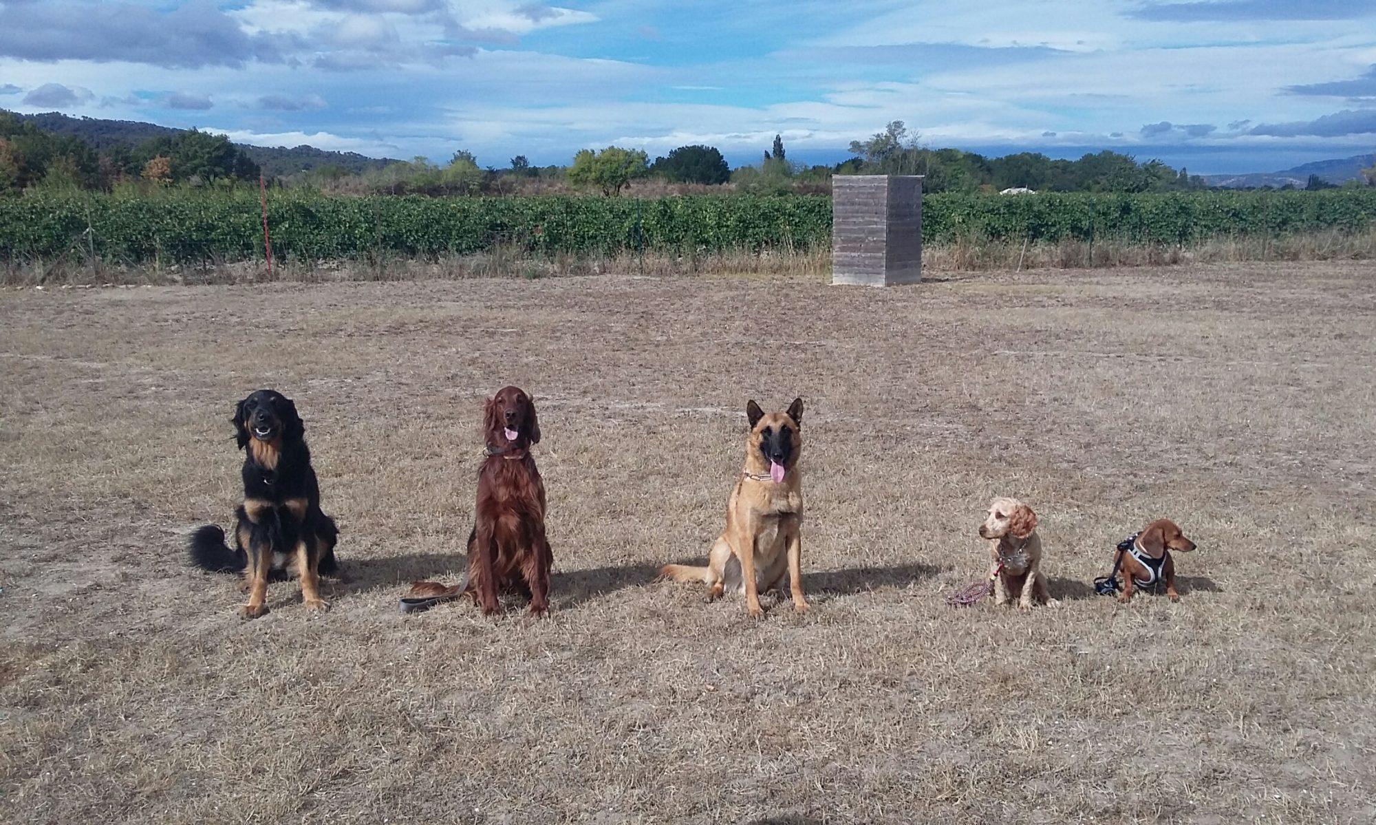 Groupe Cynotechnique Luberon 84  Education Canine Cadenet